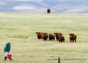 Montana Guest Ranches
