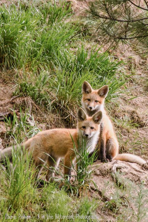 See Wildlife In Montana S Bitterroot Valley
