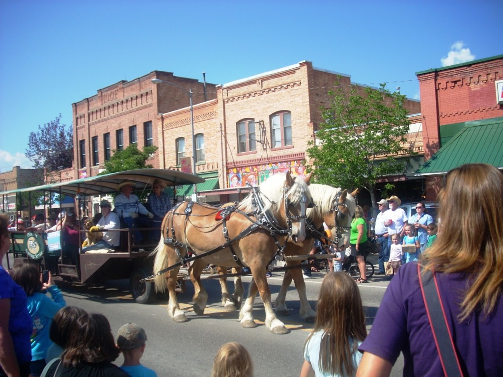 clydesdale on parade in stevensville montana creamery picnic