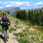 mountain biking montana wildflowers