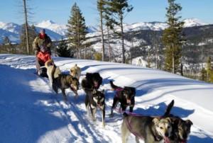 dog sledding montana vacation