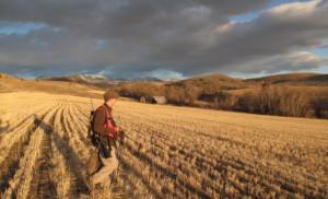 hunter in a field in Bitterroot Valley