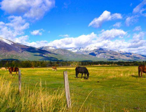 Horses in a Bitterroot Pasture