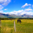 horses in montana pasture by marie christopher