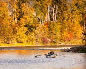 fisherman in drift boat on bitterroot river in fall colors