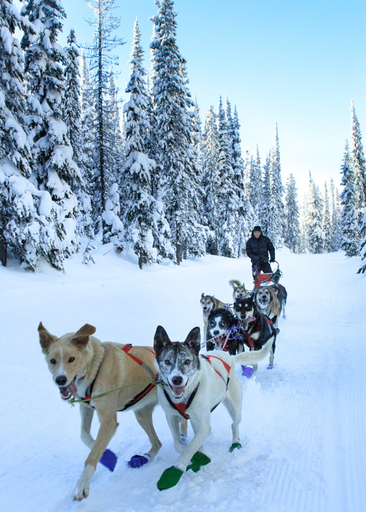 dog sled team racing at lost trail pass