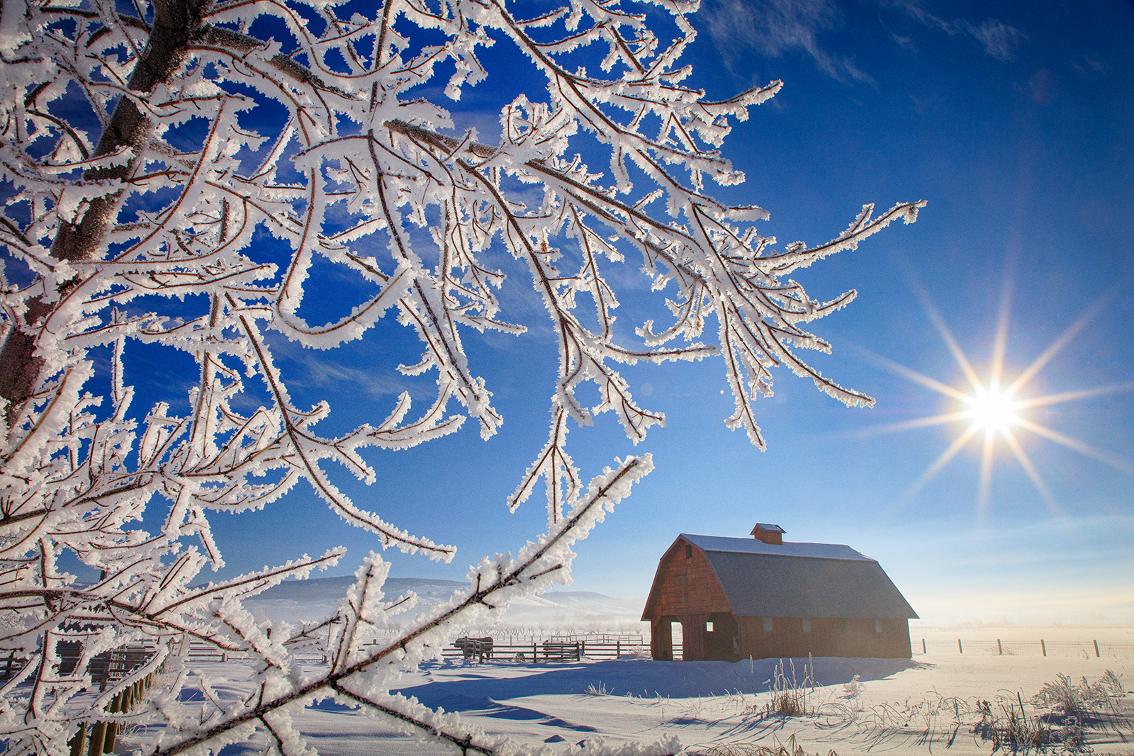 winter frost on branch with barn and sun in background