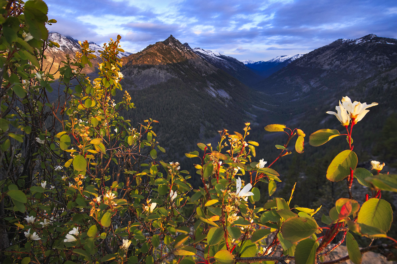 flowers at sunrise at Bitter Root Mountains